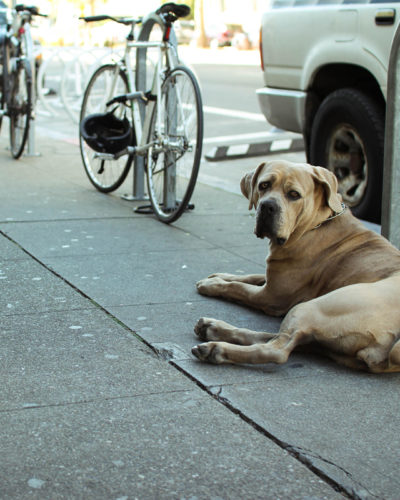 Photo of dog on sidewalk